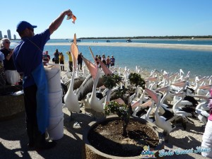 pelicans-labradorP1050460
