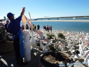 pelicans-labradorP1050461